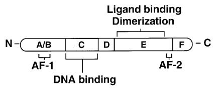 De structuur van een kernreceptor met diens vijf domeinen. Figuur overgenomen uit [1].