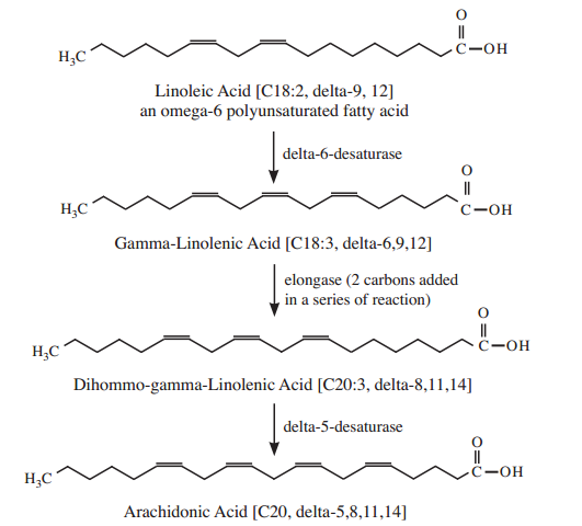 Biosynthese van arachidonzuur uit linolzuur. Figuur overgenomen uit [1].